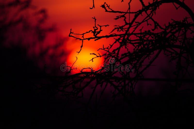 En härlig flammande solnedgång till och med trädfilialerna royaltyfri foto
