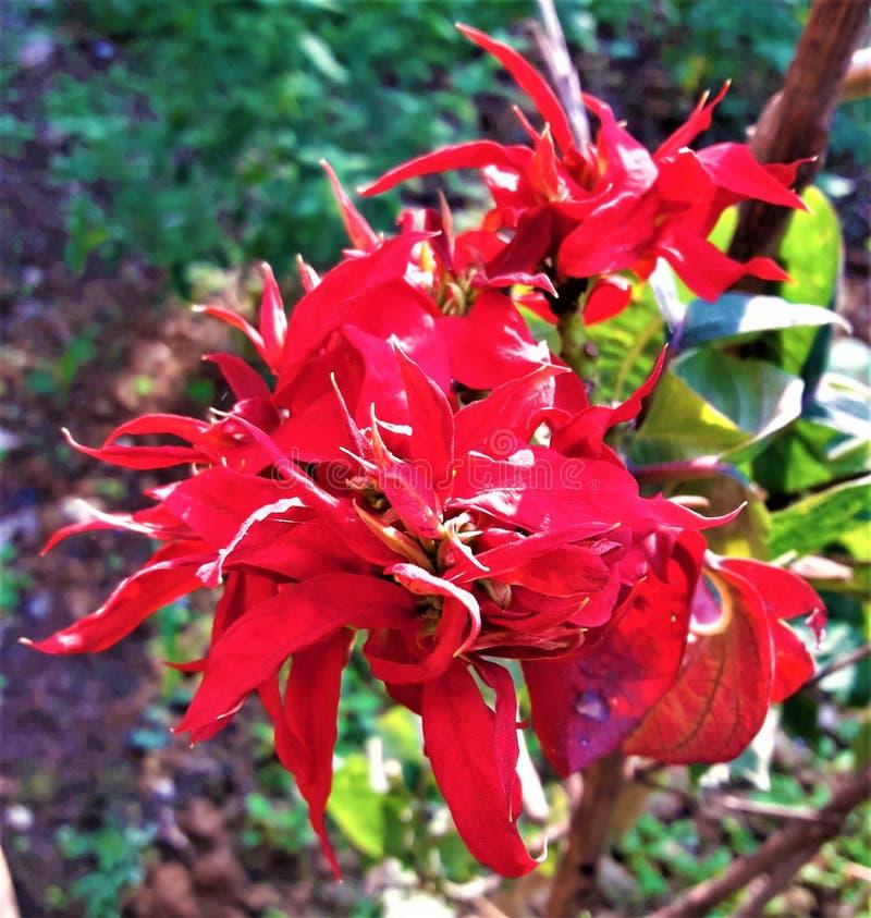 En härlig fokus på mörkt - röd blomma fotografering för bildbyråer