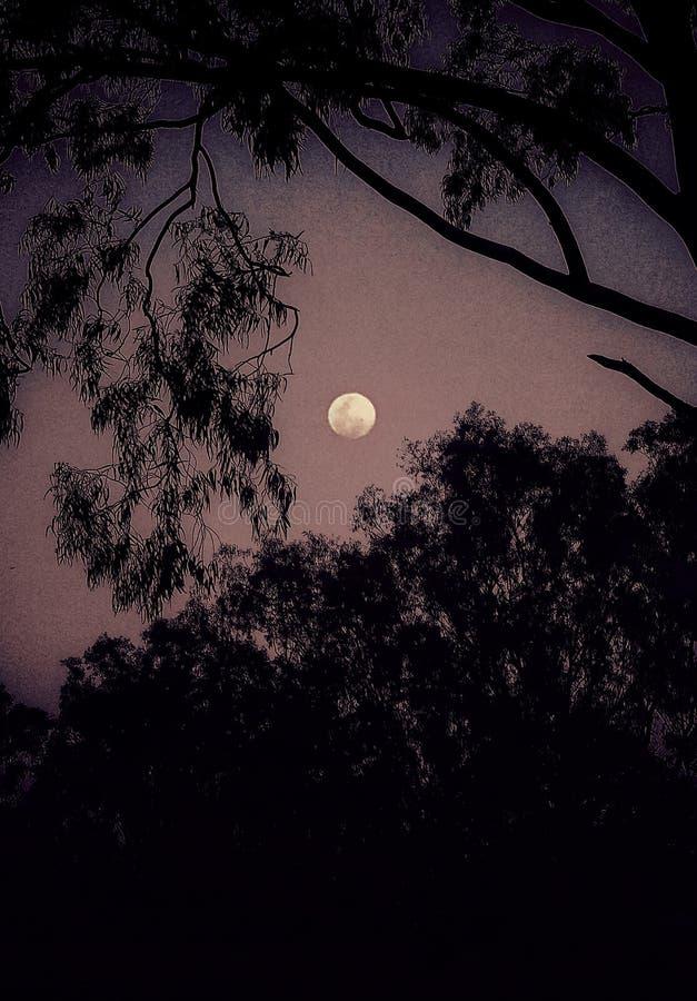 En härlig fullmånesikt till och med träden fotografering för bildbyråer
