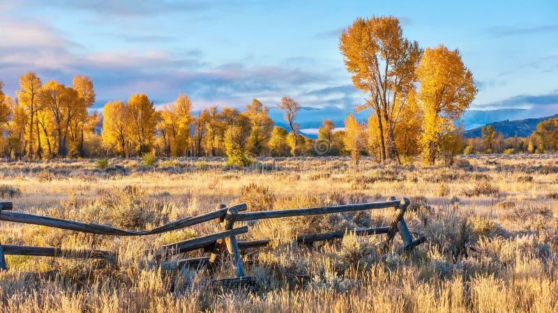 En härlig höstmorgon i Jackson Hole, Wyoming, med guld- nedgånglövverk arkivfoton