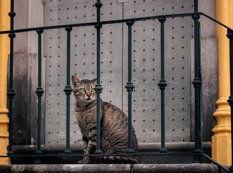 En härlig katt i gatan arkivfoto