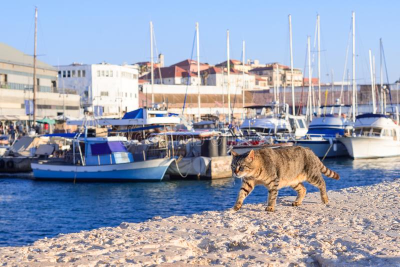 En härlig katt promenerar havspir Gammal stad och port av Jaffa av den Tel Aviv staden, Israel arkivfoto
