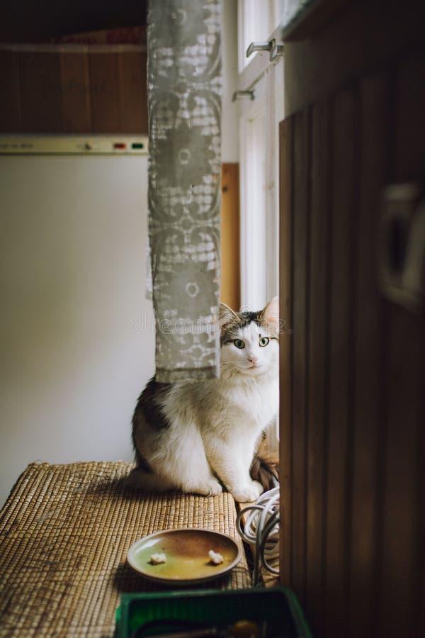 En härlig katt som sitter bara vid fönstret royaltyfria bilder