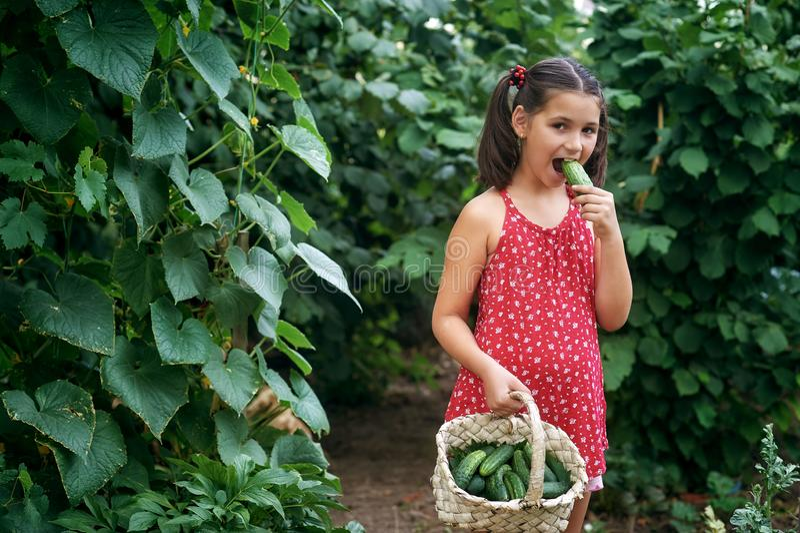 En härlig liten flicka i skördarna för förorts- område fotografering för bildbyråer