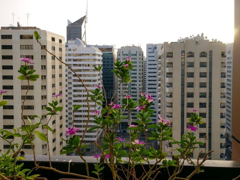En härlig morgonsoluppgång i den Abu Dhabi staden avslappnande sikt från balkongen med härliga blommor arkivfoton