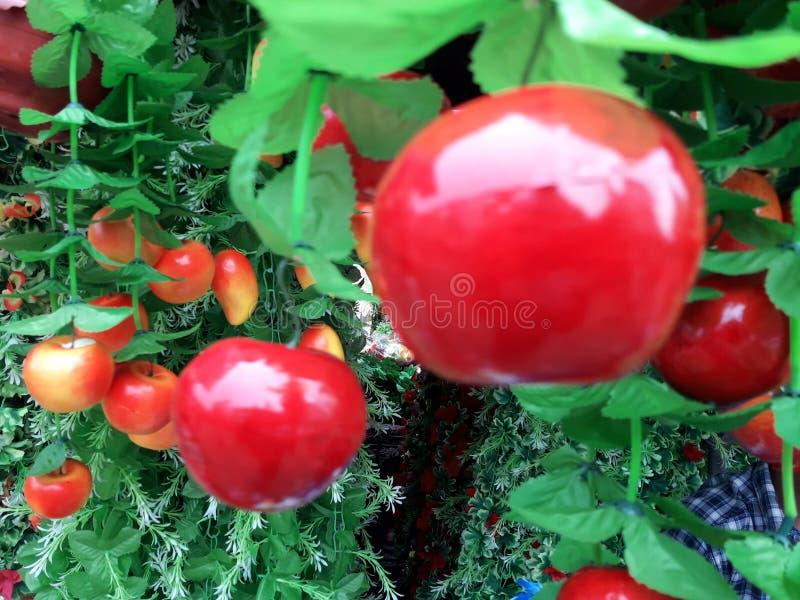 En härlig röd färg Appel i trädgård fotografering för bildbyråer