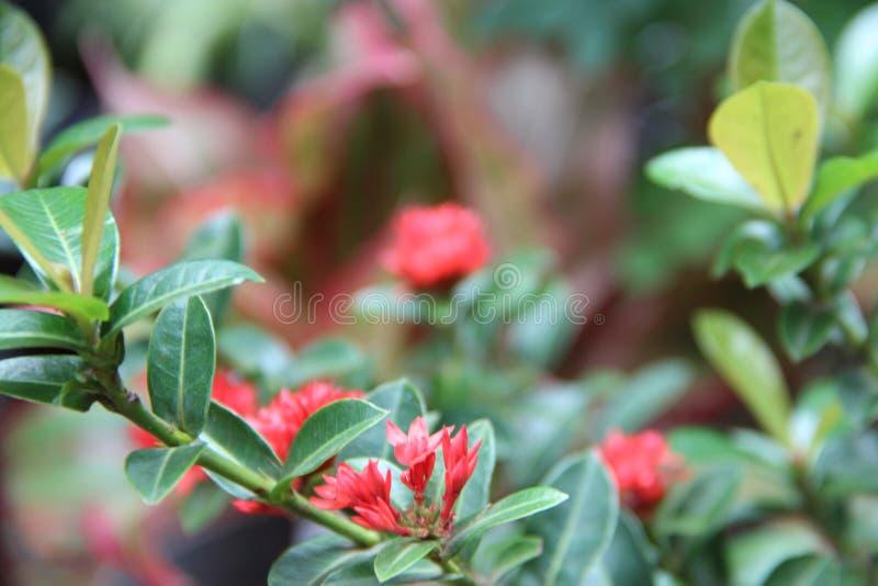 En härlig röd hängande växt fotografering för bildbyråer