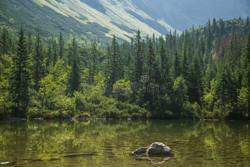 En härlig ren sjö i bergdalen i stillhet, solig dag Berglandskap med vatten i sommar arkivbilder