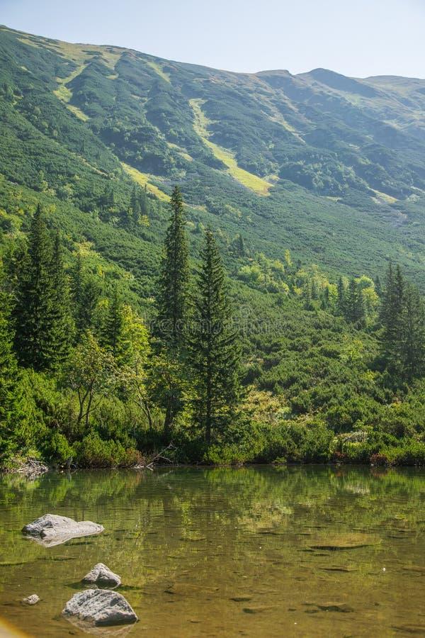 En härlig ren sjö i bergdalen i stillhet, solig dag Berglandskap med vatten i sommar royaltyfri fotografi