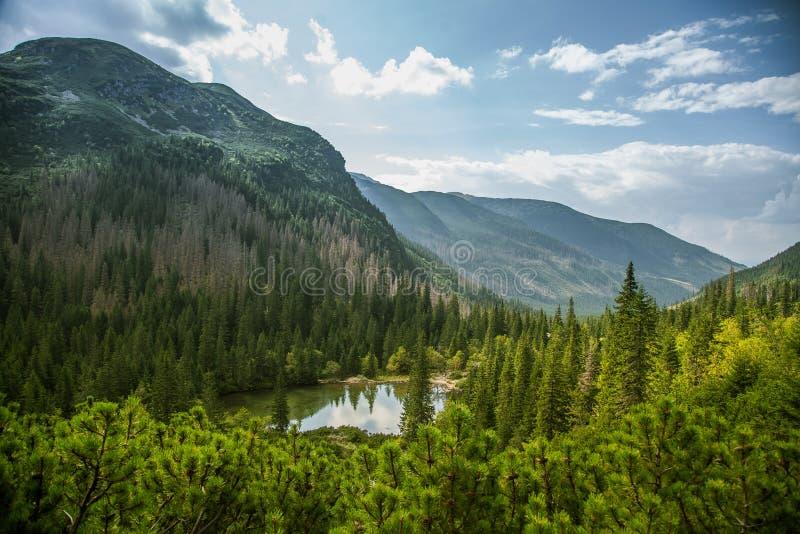 En härlig ren sjö i bergdalen i stillhet, solig dag Berglandskap med vatten i sommar royaltyfri bild