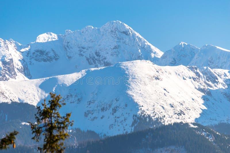 En härlig sikt av de polska Tatra bergen med träd i förgrunden Solig härlig dag i vintern, snö-korkad montering arkivbilder
