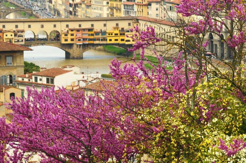 En härlig sikt av den berömda Ponten Vecchio i Florence på River Arno i Italien som tas från Piazzale Michelangelo på en vårdag royaltyfria bilder