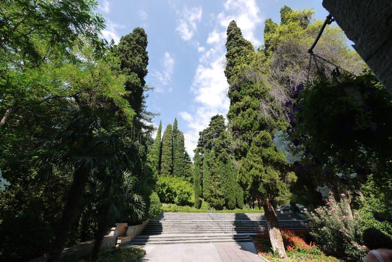 En härlig sikt av den blåa himlen med sällsynta moln som, om ligga på blasten av högväxta täta träd som växer i parkera royaltyfri fotografi