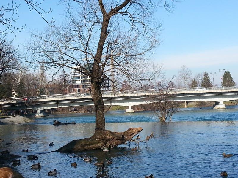 En härlig sikt av floden och bron arkivfoto