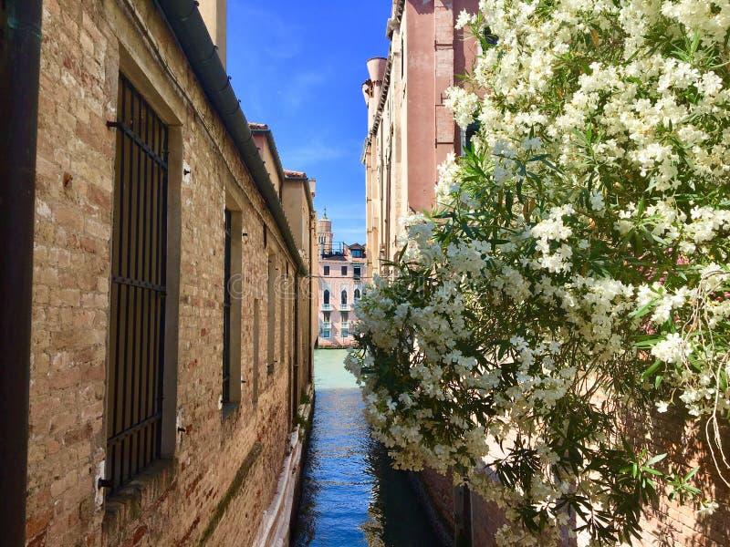 En härlig sikt av en mycket smal kanal som leder till den storslagna kanalen Byggnaderna är gamla och har teckenet royaltyfria bilder