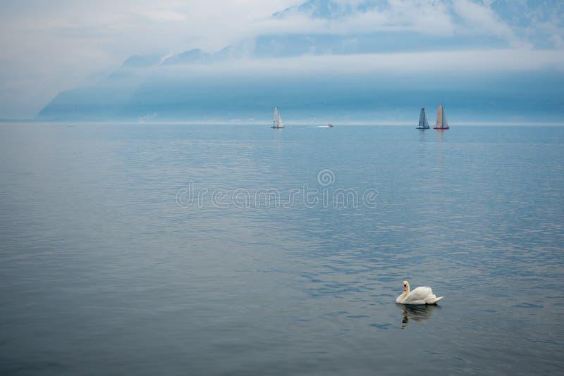 En härlig sikt av sjöGenève med en vit gås som svävar på alpin bergbakgrund arkivbild