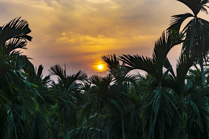 En härlig sikt av solnedgången över skogen av Arecanutbladet arkivfoto