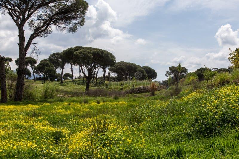 En härlig skog i muğla royaltyfria foton