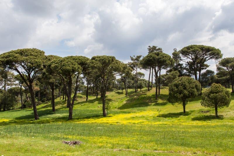 En härlig skog i mugla arkivbilder