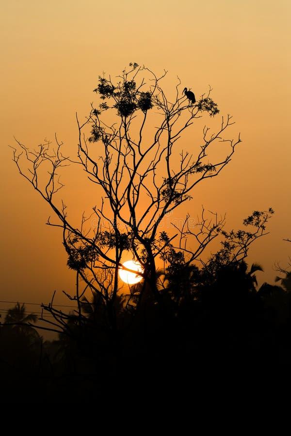 En härlig sol som skiner till och med ett träd royaltyfri bild