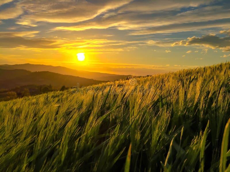 En härlig solnedgång royaltyfria bilder