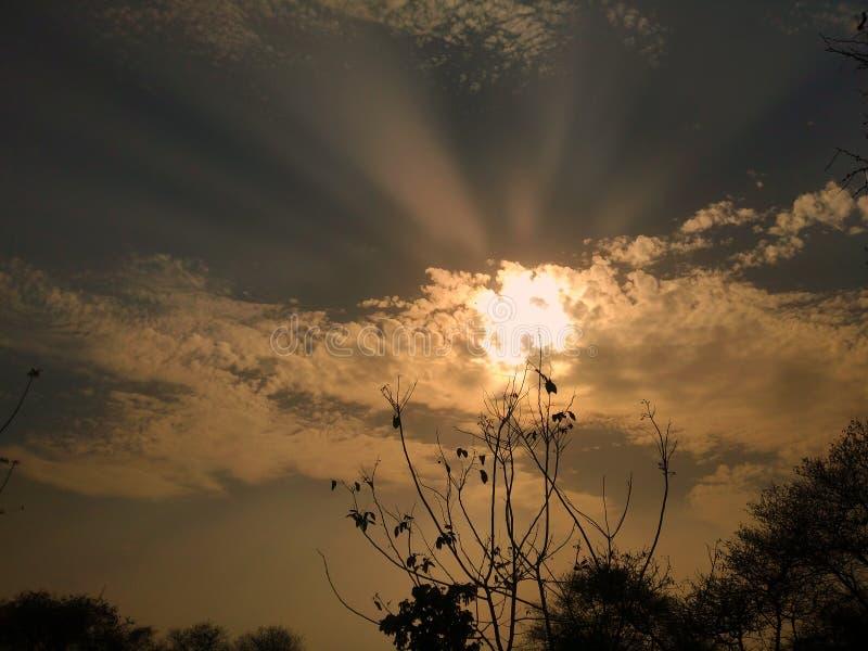En härlig solnedgång på parkerar bak trädet , royaltyfri fotografi