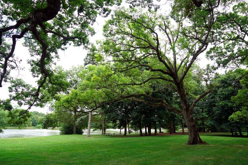 En härlig sommar parkerar med träd och sjön arkivbild