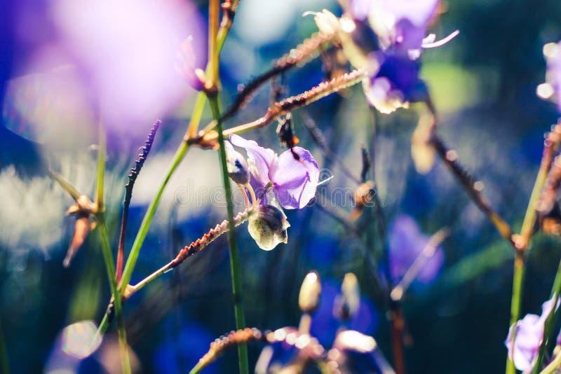 En härlig tid på morgonen med blommafältet royaltyfri fotografi