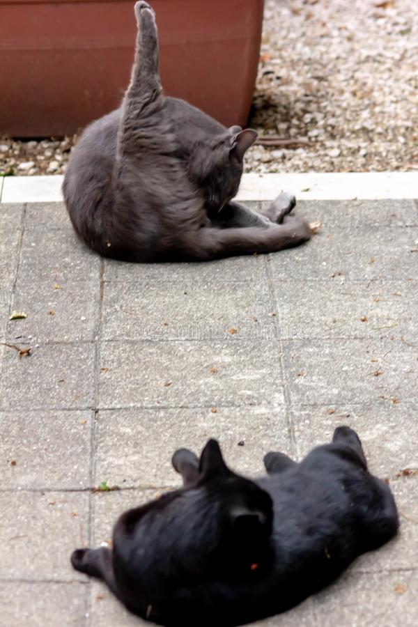 En härlig tillfällig katt som ligger på ett kallt golv, medan slicka sig för att göra ren royaltyfri fotografi