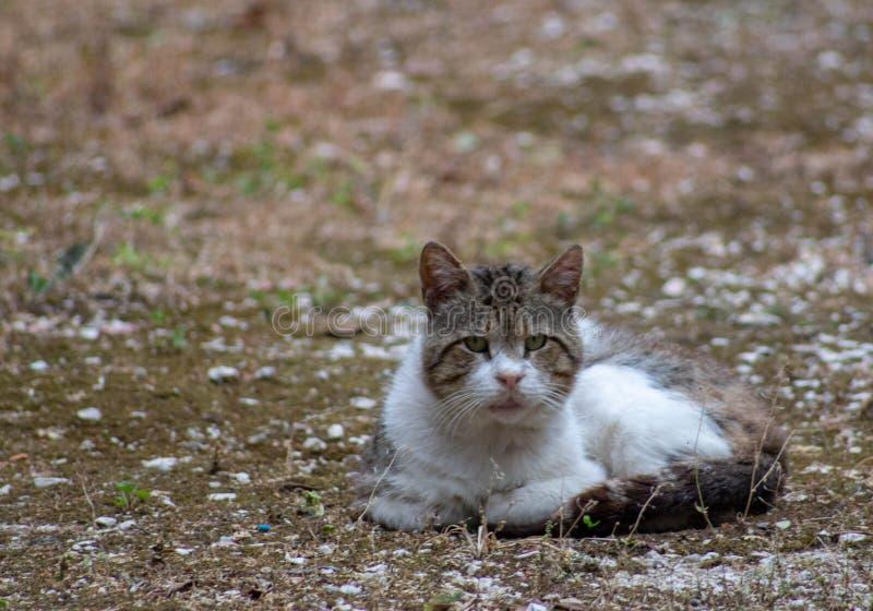 En härlig tillfällig katt som ligger på kall jordning, medan hålla ögonen på alla som är avkopplad royaltyfri bild