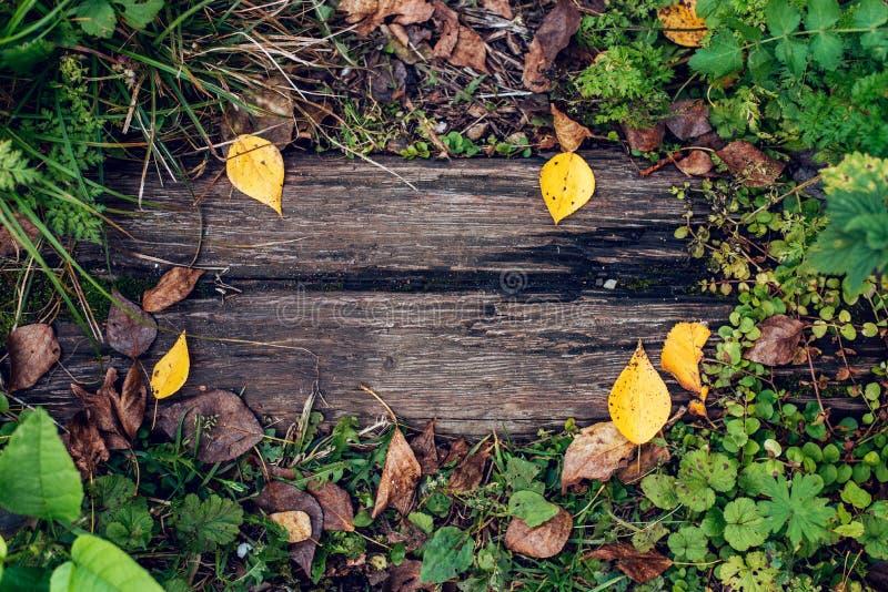 En härlig träbakgrund, ett blad av en höstdag för gul gräsplan i natur, en sprucken planka på jordningen textur arkivbild