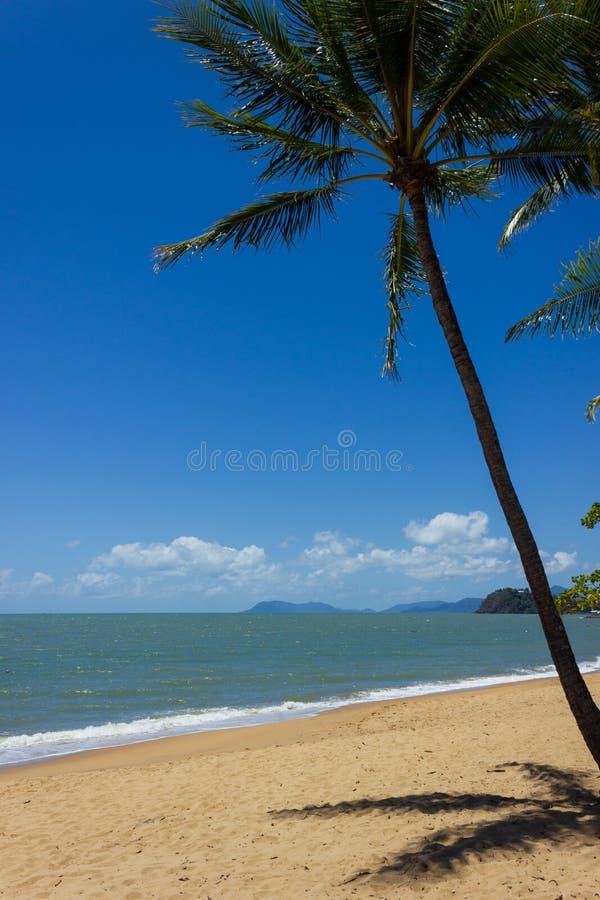 En härlig tropisk strand med palmträd i nordliga Australien, cliftonstrand, queensland, Australien arkivbild