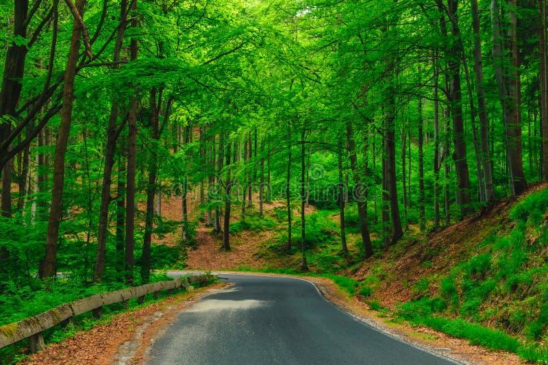 En härlig väg i skogen fotografering för bildbyråer