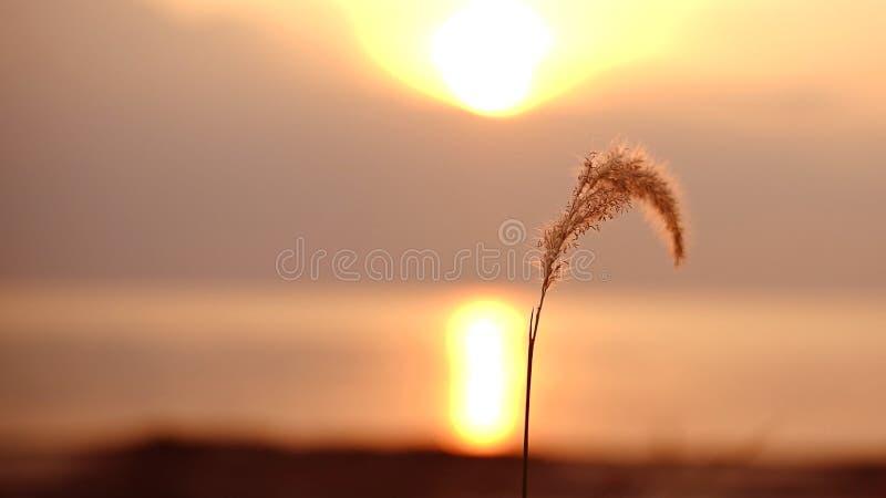 En härlig växt med solnedgångbakgrund royaltyfria bilder