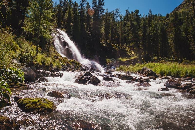En härlig vattenfall i skogen royaltyfri fotografi