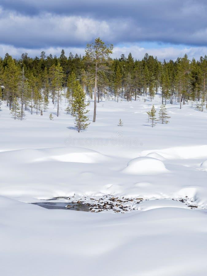 En härlig vinterskog som täckas av insnöade Finland royaltyfri bild