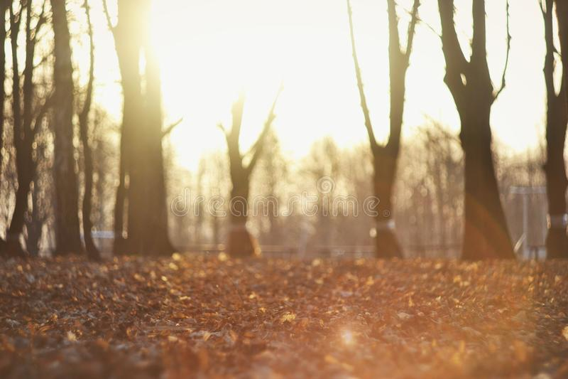 En härliga Autumn Background With Sunshine royaltyfria foton