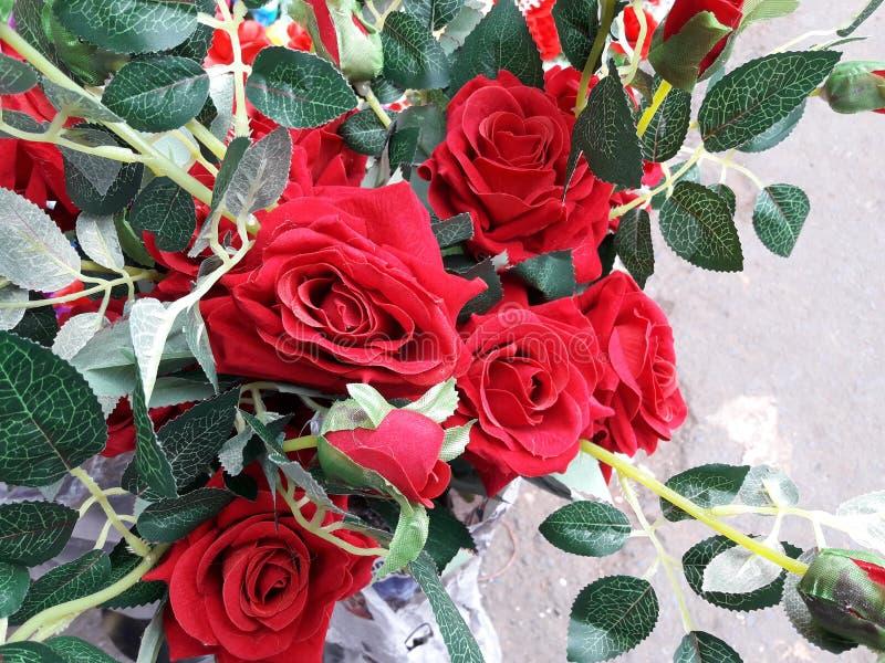 En härliga röda Rose Flowers i trädgård till västra Bengal arkivbild