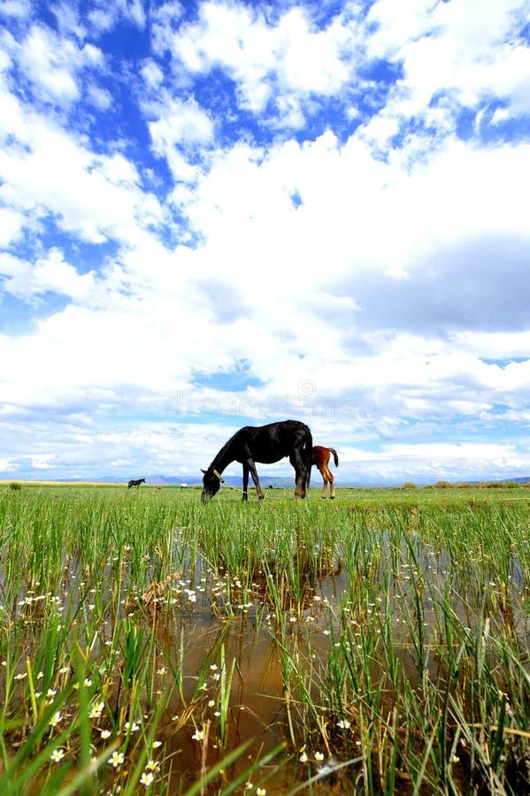 En häst royaltyfria foton