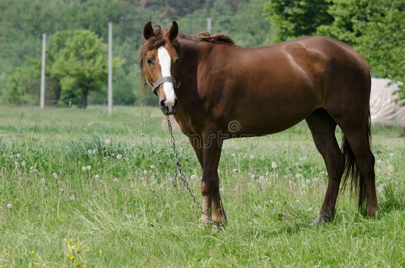En häst betar arkivbilder