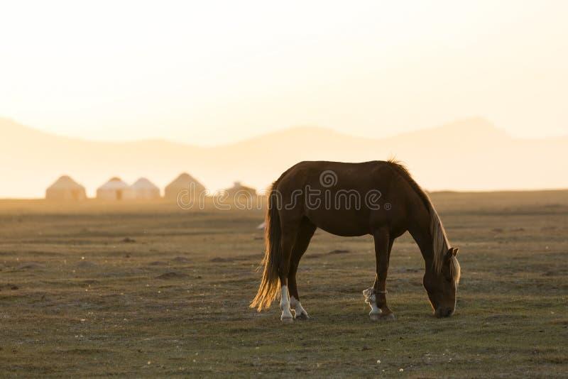 En häst betar framme av en Yurt bosättning nära sångKul sjön arkivfoto