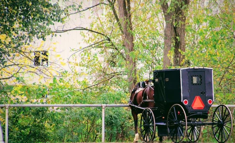 En häst och dess barnvagn royaltyfria bilder