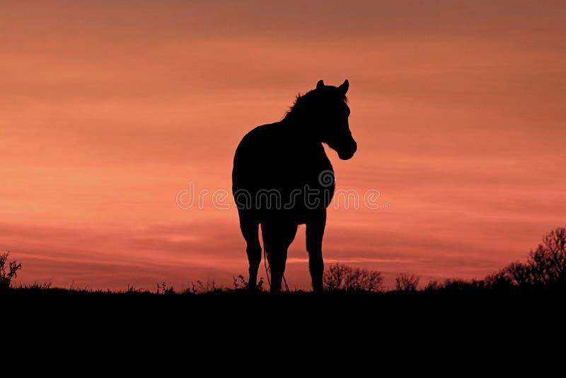 En häst på solnedgången royaltyfri bild