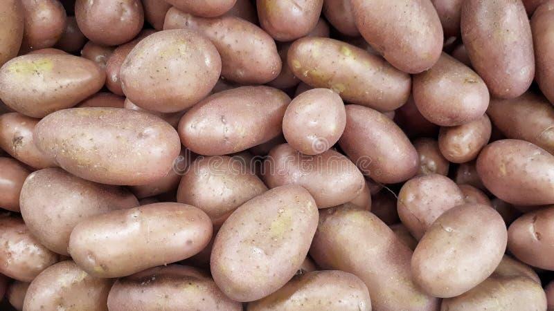 En hög av nya röda potatisar arkivbild