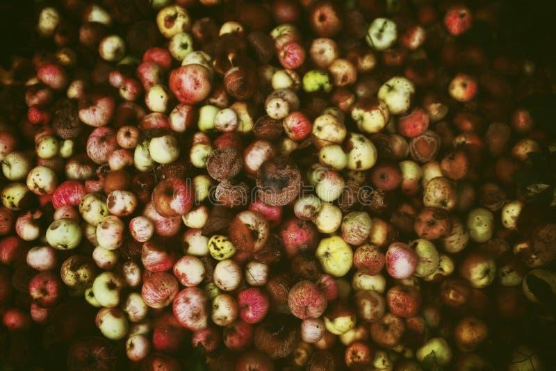 En hög av ruttna äpplen arkivfoto