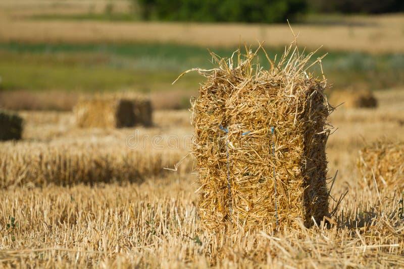 En hög av sugrörvete i ett fält arkivfoton