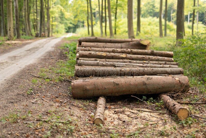 En hög av trä i ordnade stycken för en lövskog av trä på arkivfoton