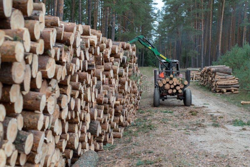 En hög av trä i ordnade stycken för en lövskog av trä på arkivfoto
