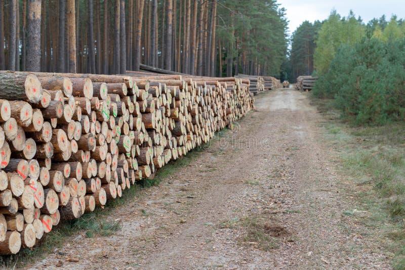 En hög av trä i ordnade stycken för en lövskog av trä på royaltyfri bild