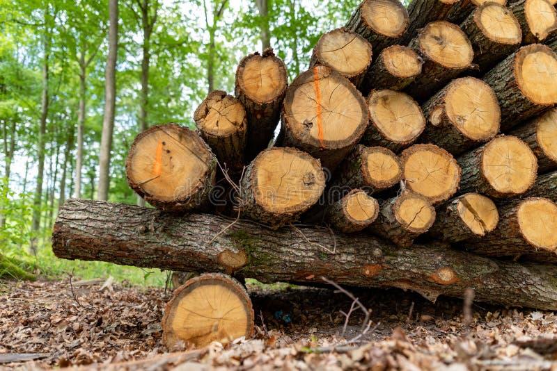 En hög av trä vid en skogväg Trä förberedde sig för export från skogen arkivbild